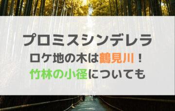 プロミスシンデレラのロケ地の木は鶴見川!竹林の小径についても